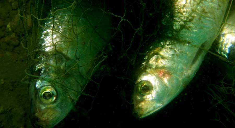 Pesca fantasma 03